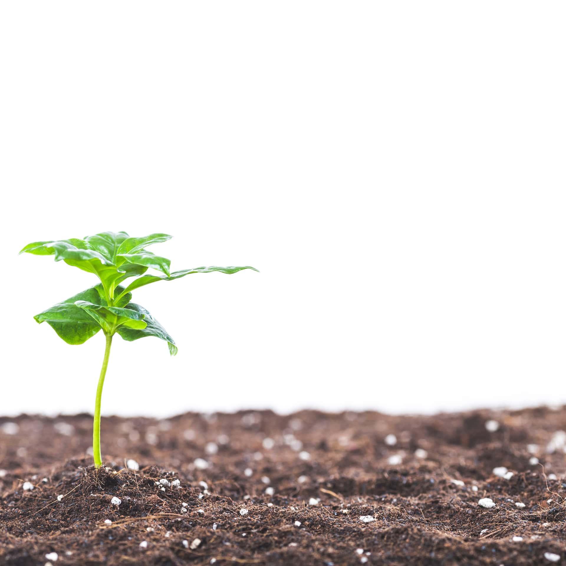 Persoonlijke groei vanuit islamitisch perspectief